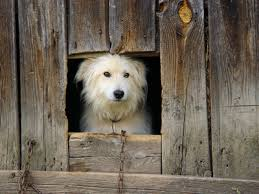 How To Reset The Transmitter On A Dog Fence Animals Mom Com