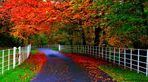 full hd nature wallpapers 1080p on