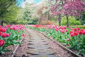 صور حدائق ورد جمال الحدائق والورود بالصور حنين الذكريات