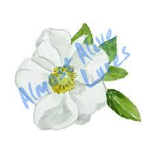 Cherokee Rose Flower Printed Vinyl Decal Wall Car Window Sticker Ebay