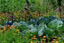 desert vegetable garden desert plants
