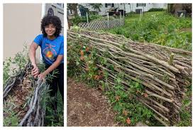 Living Woven Willow Brush Fence Midwest Permaculture