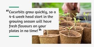 seed starting guide calendar for