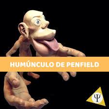 el homúnculo de penfield qué es