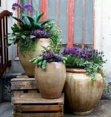 potted succulents and purple flowers