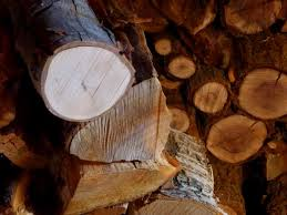 the best firewood for burning