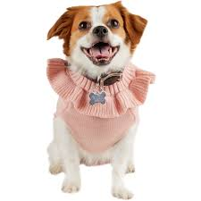 petco bond co bougie princess dog
