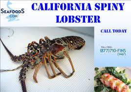 California Spiny Lobster Season Opens ...