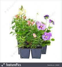 photo of bedding plants