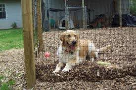 Diy Dog Fence Kit Easy To Install And Strong Enough For All Size Dogs Diy Dog Fence Dog Fence Diy Dog Stuff