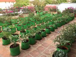 grow your own kitchen garden metro style