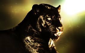free black panther wallpaper 1080p at