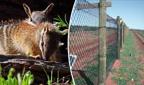 Australia Completes World S Largest Cat Proof Fence To Protect Endangered Marsupials Ecology Way