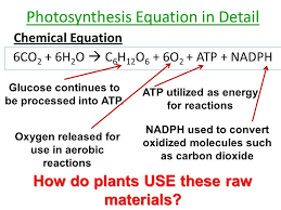 photosynthesis honors biology atp