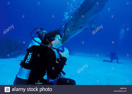 ASHLEY SNYDER GETS A KISS FROM A TRAINED ATLANTIC BOTTLENOSE DOLPHIN Stock  Photo - Alamy