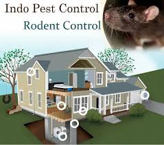 Rats, Mice And Unicorns – Call The Pest Control Experts in 2020 | Termite  control, Pest control, Rodents