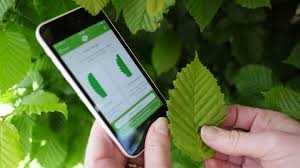 Identify Trees With Our Tree ID app - Woodland Trust - Woodland Trust
