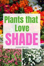 the 10 best plants that grow in shade