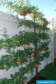 rising trellises nice concept for the
