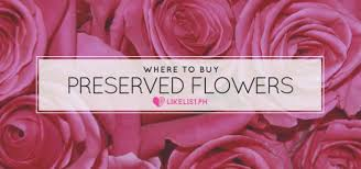 where to buy preserved flowers in the