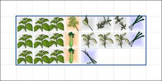 garden plan vegtrug