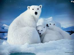 polar bear wallpapers 4k 1024x768 px