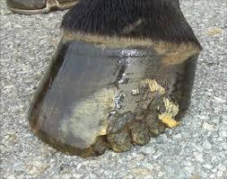 glue on horseshoes by soundhorse