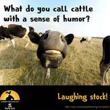 20 Cows Stuck Ideas Cow Animals Funny Animals
