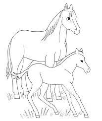 Paard En Veulen Kleurplaat Gratis Kleurplaten Printen