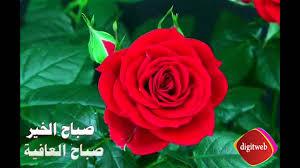 تفتح الورد صباح الخير صباح العافية Youtube