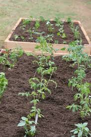 irrigation system for raised bed garden