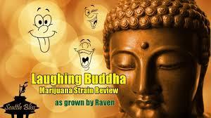 laughing buddha 2019 strain