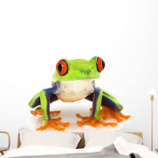 Amazon Com Wallmonkeys Red Eyed Tree Frog Wall Decal Peel And Stick Animal Graphics 48 In H X 38 In W Wm340549 Home Kitchen