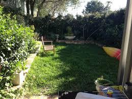 australian native courtyard garden