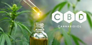 CBD Oil Brings Health Benefits to Pets and People - Word Matters!