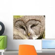 Bartkauz Great Grey Owl Wall Decal Wallmonkeys Com