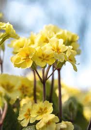 أجمل الزهور التي تزهر في الشتاء المرسال