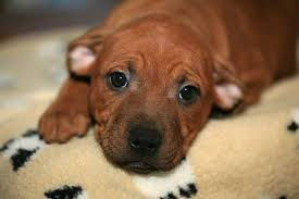 8 home remes for deworming puppies
