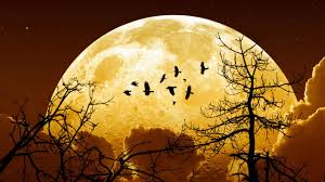 Today will be the largest moon in the world 2020 1