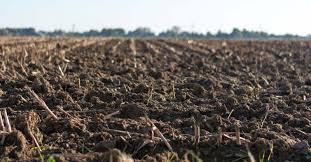 how to sterilize soil to beat back bugs