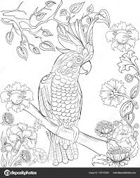 Cockatoo Parrot For Coloring Book Anti Stress Coloring For Adult