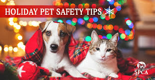 top holiday pet safety tips