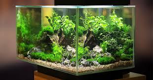 Freshwater Aquariums Are Live Plants For Your Aquarium