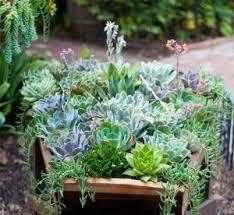 top mother s day garden gift ideas