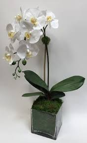 28 faux cream orchid with glass vase