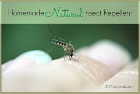 homemade mosquito repellent keep