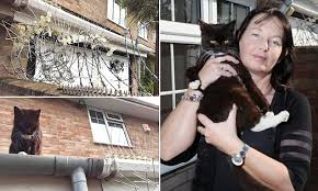 Neighbours Put Barbed Wire Up In Their Garden To Keep Out Cat Daily Mail Online