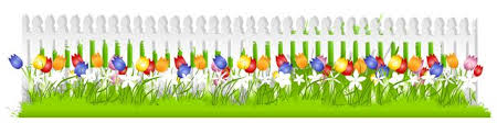 Row Tulips White Picket Fence Stock Illustration Illustration Of Color Multi 4463253