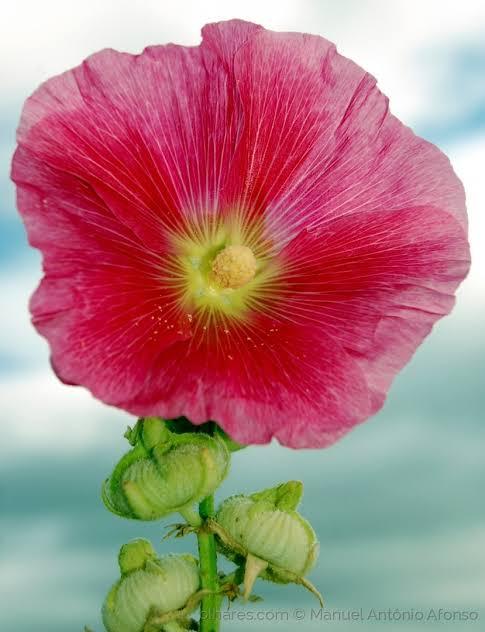 """Resultado de imagem para flor sem nome"""""""