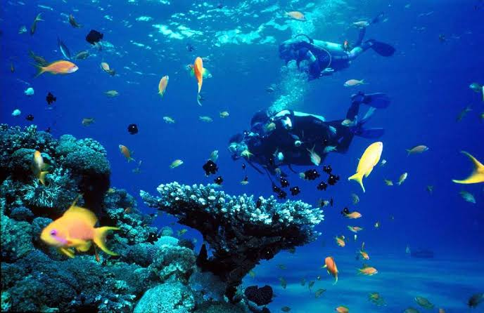 "Image result for diving karimun jawa"""